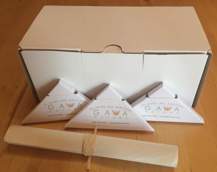 Butterfly packing box