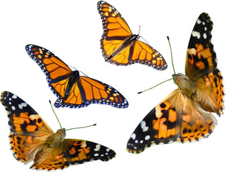 Butterfly Releases Your Questions Our Answers